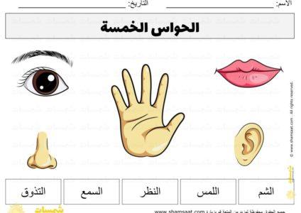 الحواس الخمسة رياض الأطفال انشطة وبطاقات بالعربي 6 Classroom Decor Classroom