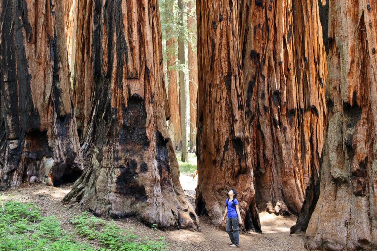 15 amazing things to do in sequoia national park kings canyon rh pinterest com