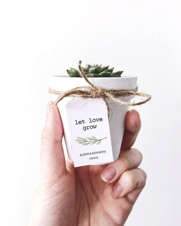 Photo of Wedding succulents – ideas for an original gift …