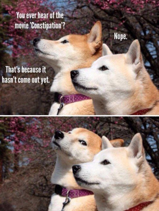 Dogs Talking About Movies Dog Jokes Haha Funny Funny Pictures