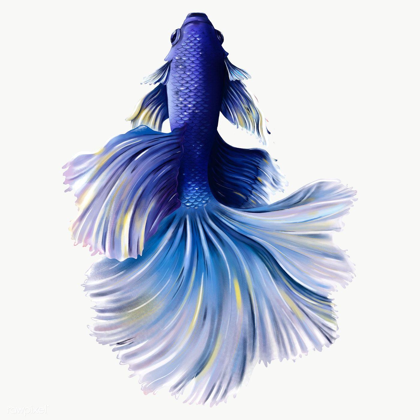 Indigo Betta Fish Design Element Premium Image By Rawpixel Com Te Fish Design Betta Fish Betta