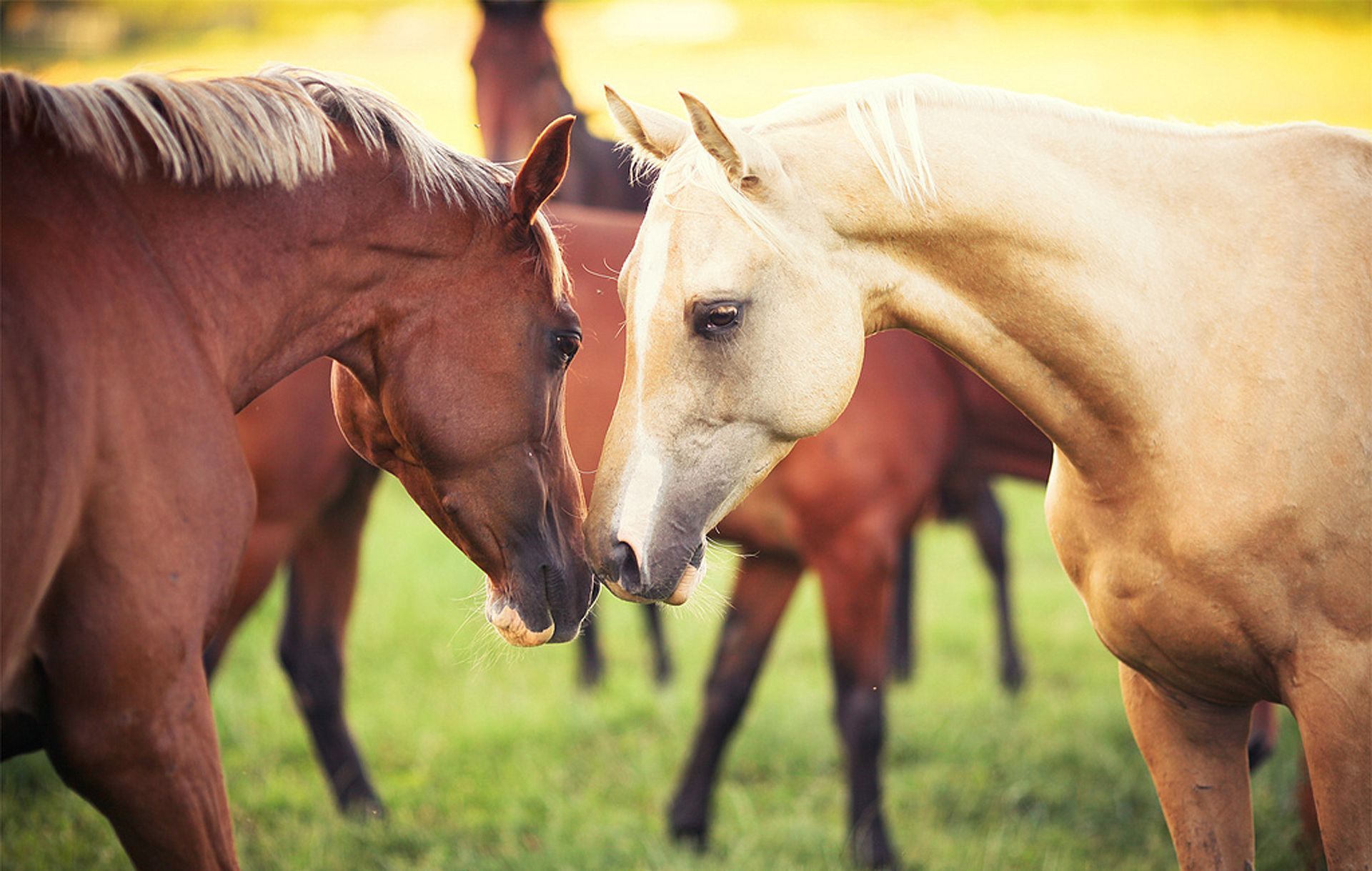 Cool Wallpaper Horse Couple - 60f5a506aebd75c397e5b702a884b2aa  Photograph_14367.jpg