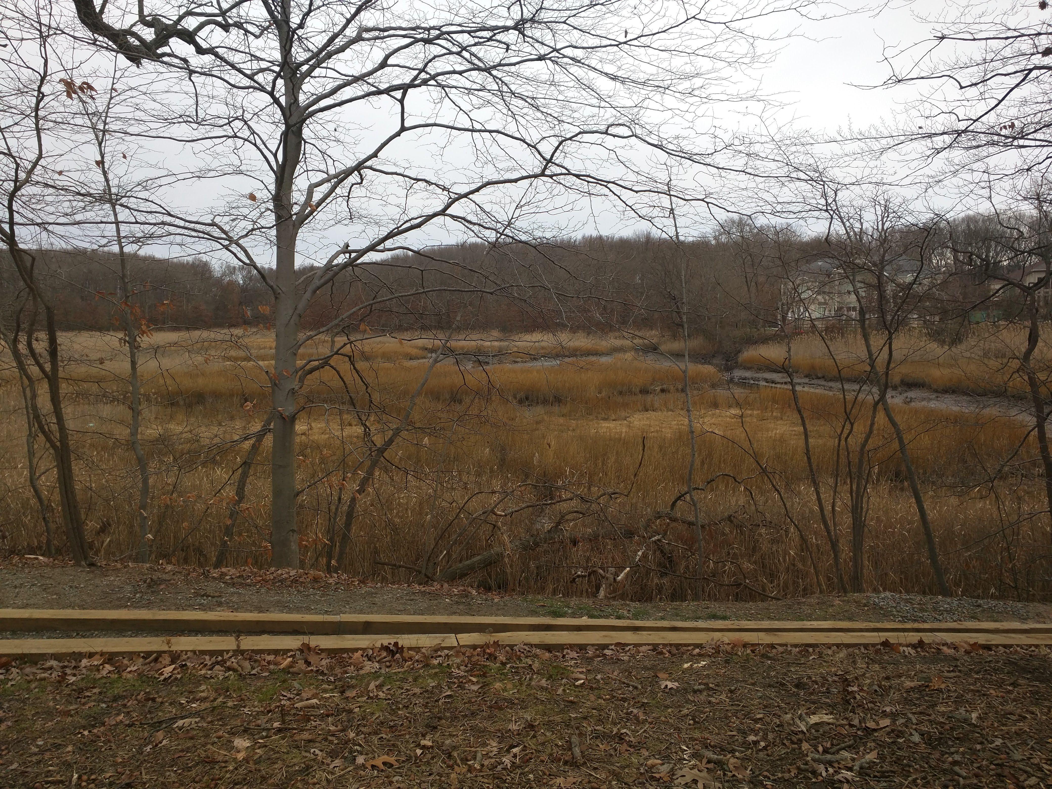 Lemon Creek Lemon Creek, Located Within Richmond County, Staten Island,  Encompasses 41.8 Acres Of Wonderfully Diverse Tidal Wetlands That Invite  All ...