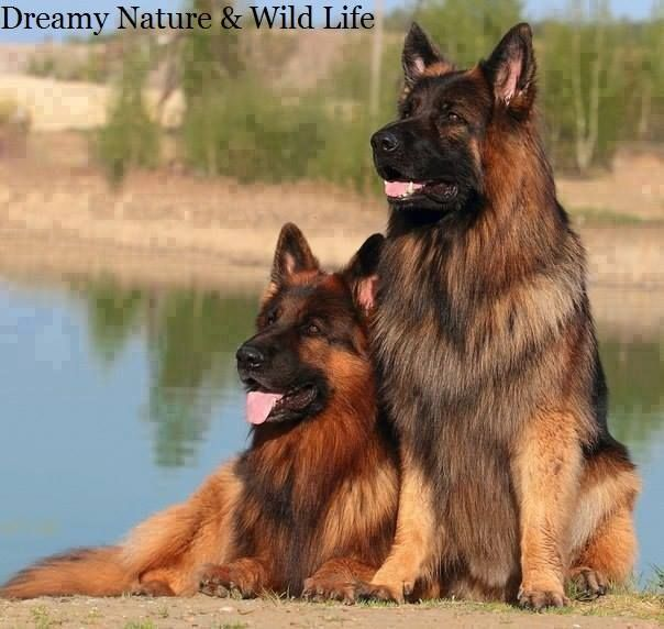Commercial Dog Food Companies And Lawsuits For Damages With Images Beautiful Dogs Dogs German Shepherd Dogs
