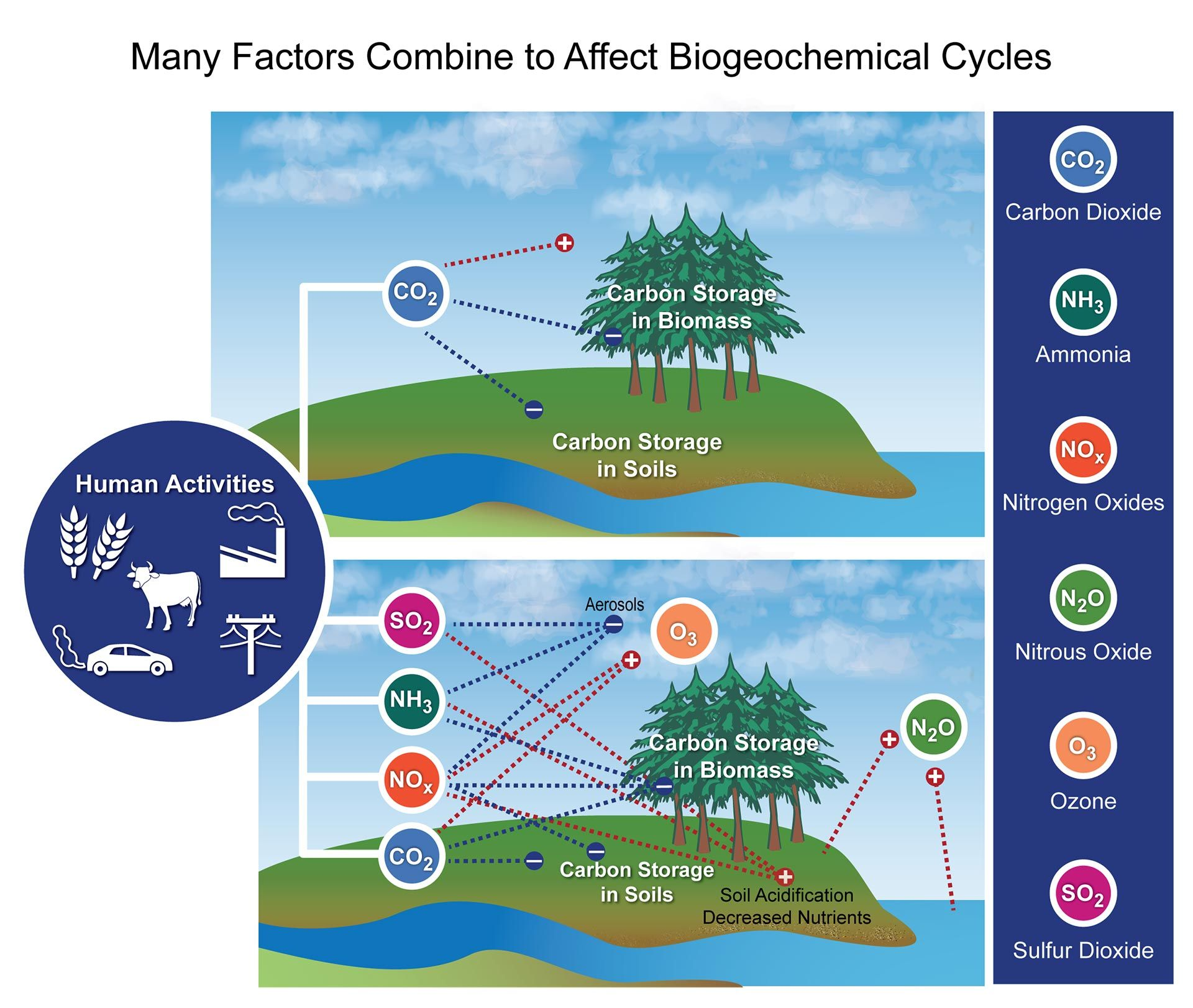 Many Factors Combine To Affect Biogeochemical Cycles