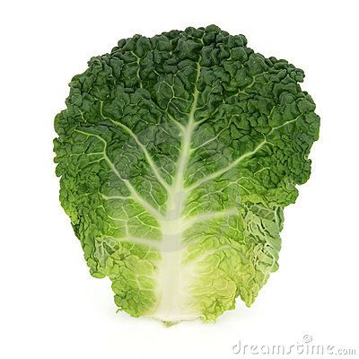 Savoy Cabbage Leaf Savoy Cabbage Cabbage Cabbage Leaves
