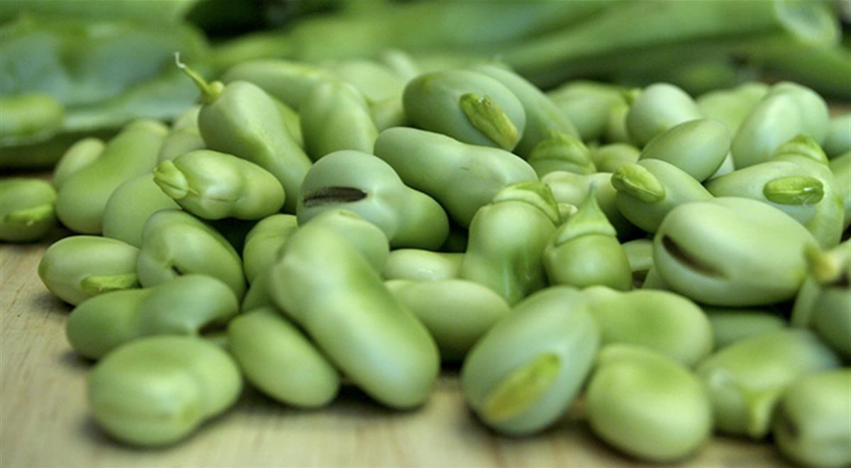 Come mangiare le fave fresche idee per cucinare i legumi