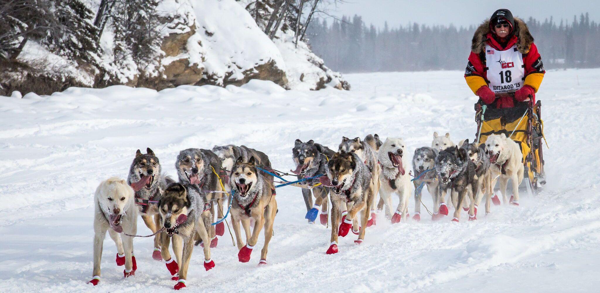 Alaska Dog Sledding Tours Seavey S Ididaride Seward Alaska