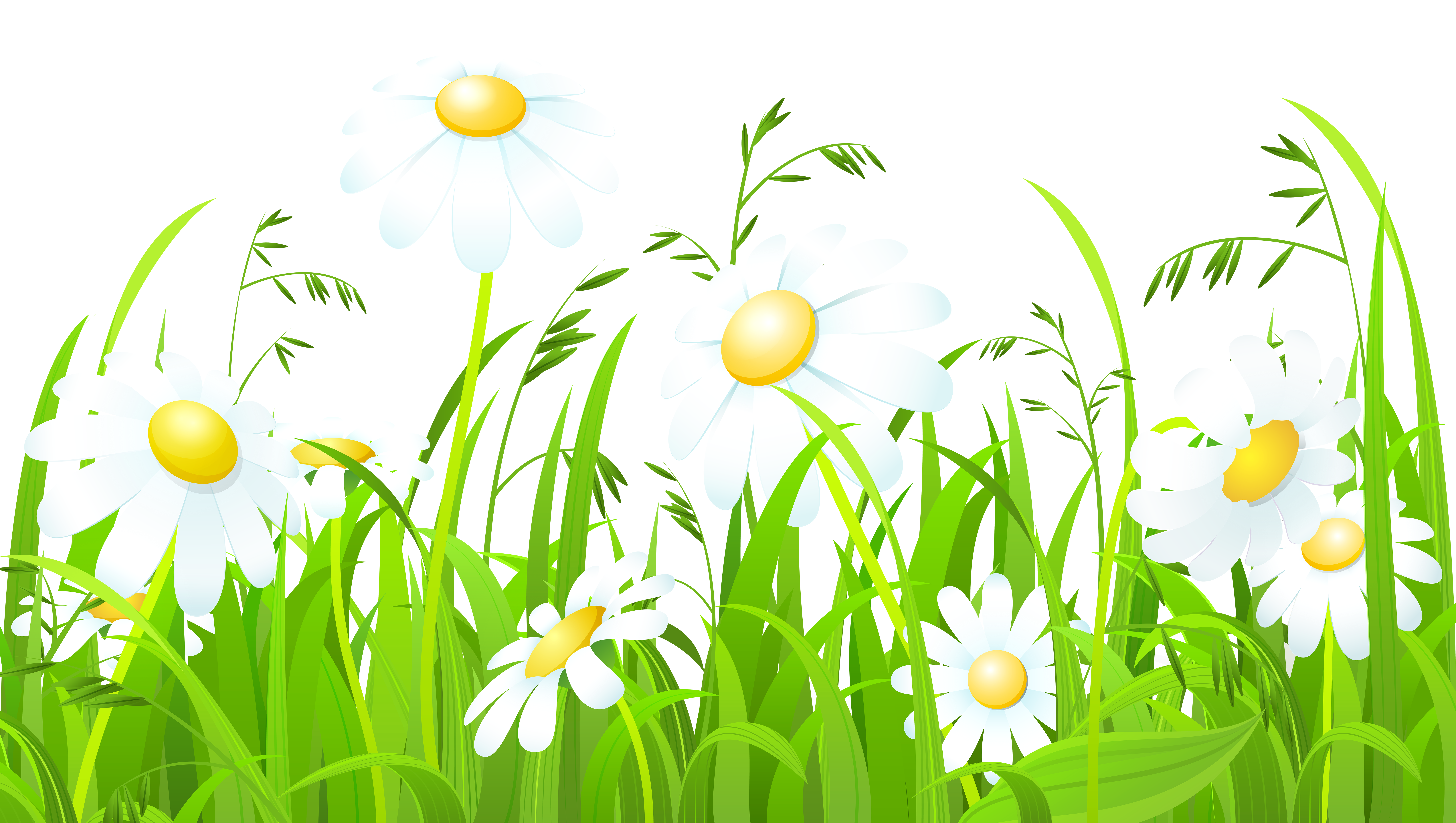 White Flowers and Grass Transparent PNG Clip Art Image