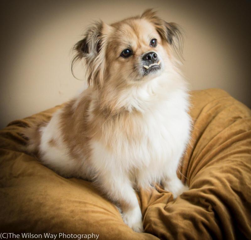 Puppy love rescue charlotte nc