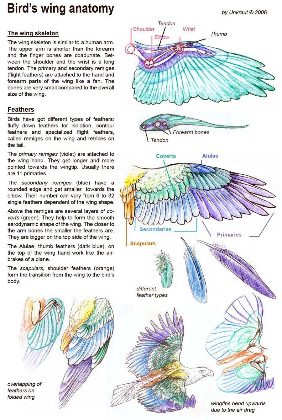 Pinterest • The world's catalog of ideas  Folded Bird Wings