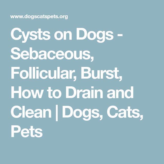 Cysts on Dogs - Sebaceous, Follicular, Burst, How to Drain