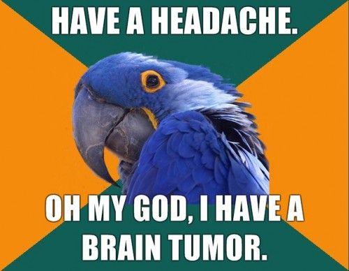 paranoid parrot aka @ ashley m :) | Parrot Humor | Funny, Funny