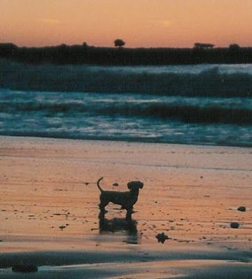 Awesome I Cant Wait To Take My Doxie To The Beach Dachshund