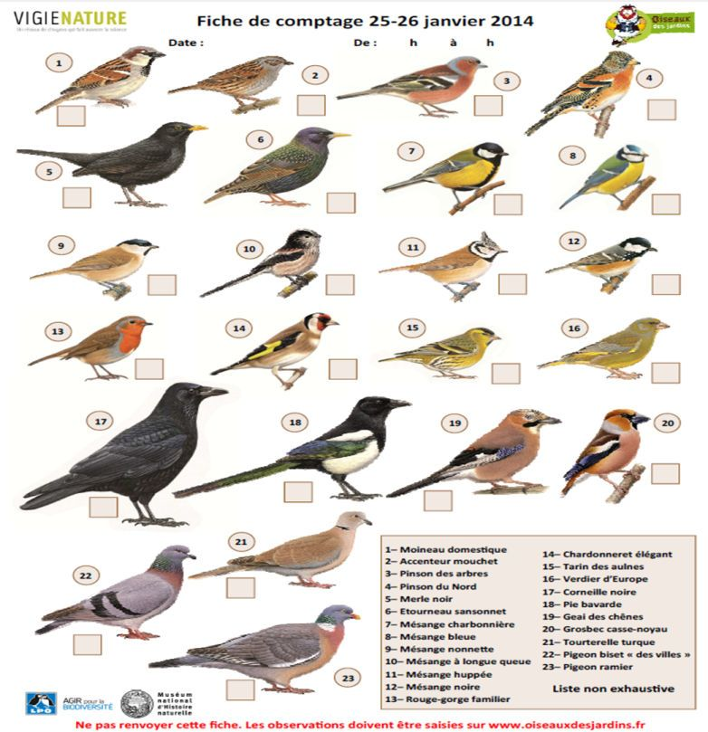 oiseaux jardin alsace recherche google jardin pinterest oiseau jardin alsace et oiseaux. Black Bedroom Furniture Sets. Home Design Ideas