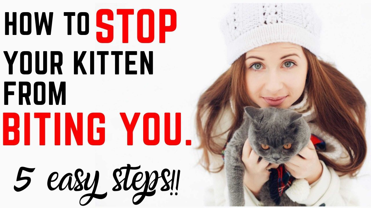 Proven Ways To Stop Your Cat From Biting You In 2020 Getting A Kitten Cat Biting Kittens
