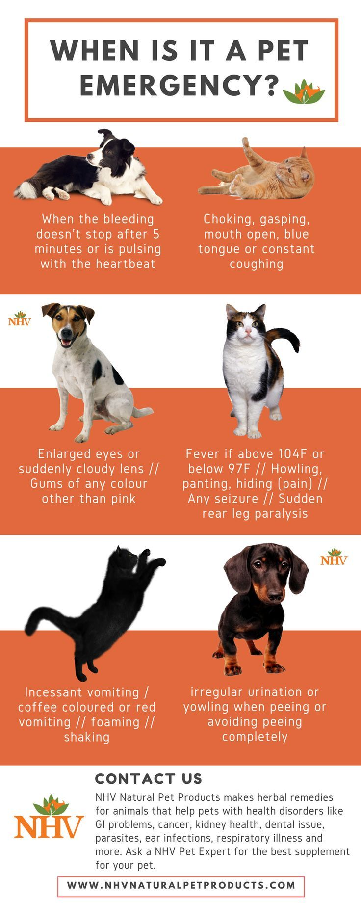 5 Signs Your Pet May Be Ill Pet emergency, Animal