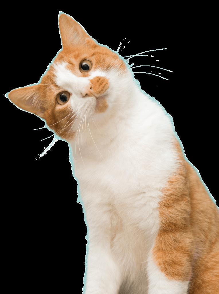 Cat Adoption Team Sherwood Cat Rescue Cat Adoption Center Cat Adoption Cat Rehoming Cat Day