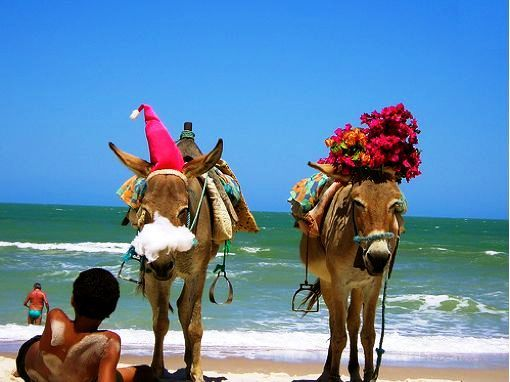 Even the Burro celebrate Christmas in Brazil...
