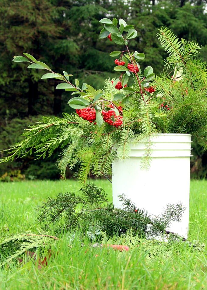 Gather some fresh evergreen cuttings and make THIS in 15 minutes