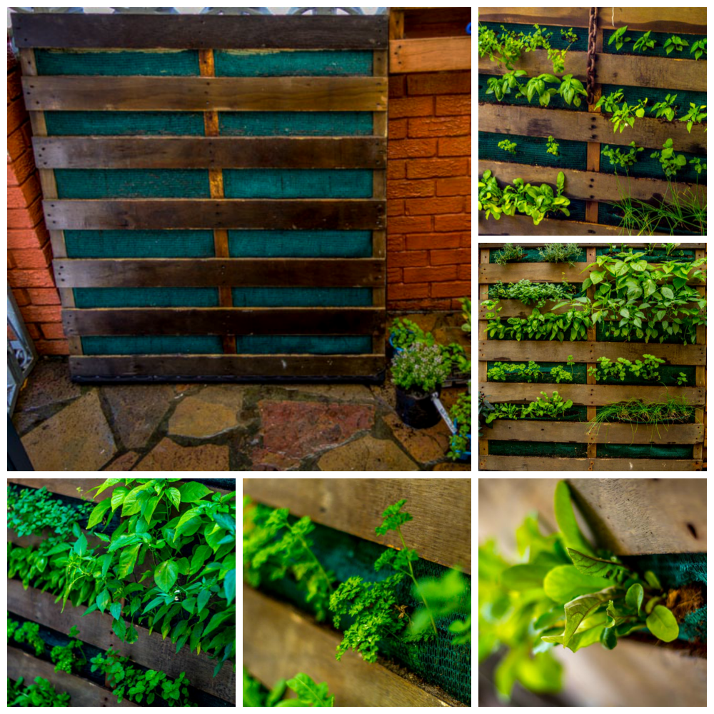 My vertical garden in a used pallet. Humble beginnings to thriving jungle.