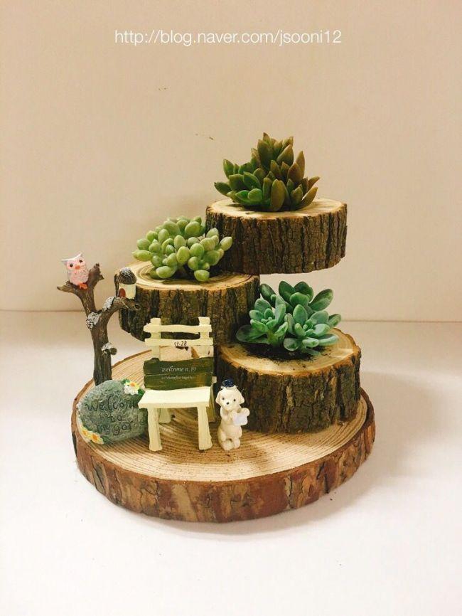 Sukkulenten Sukkulenten #succulents