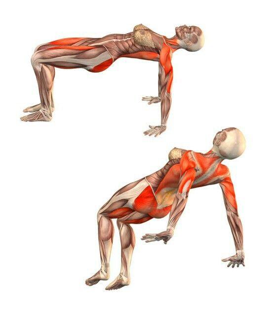 Sahaja purvottanasana   Yoga   Pinterest   Posturas de yoga ...