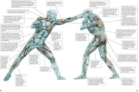 Pin de Ekrem Fetić en Fitness | Pinterest | Puños, Anatomía y Marcial