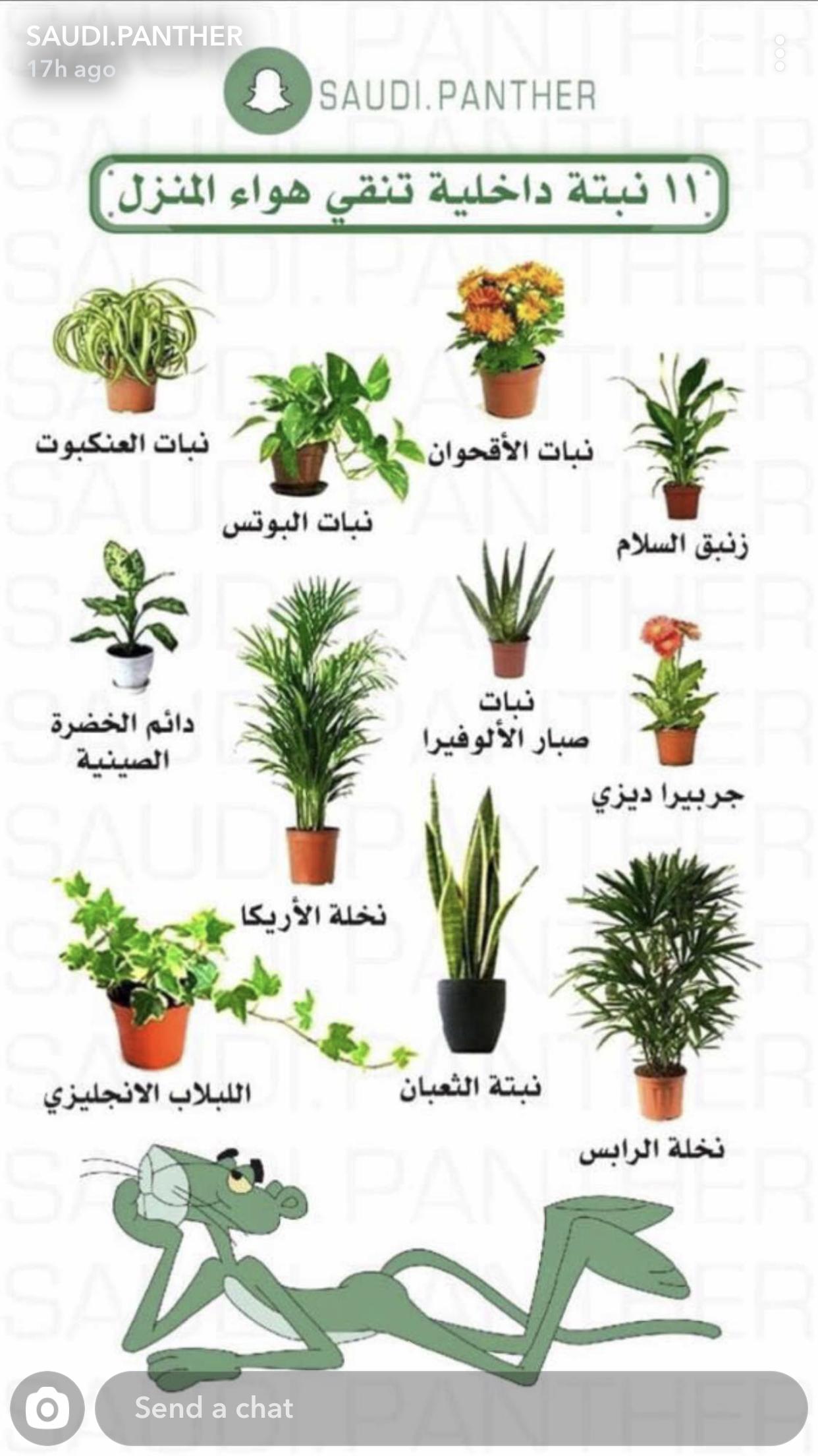 نباتات داخليه House Plants Decor Plant Decor Fairy Garden Diy