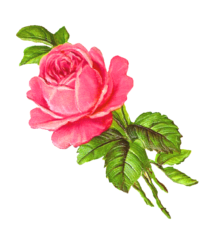 Free Pink Rose Digital Download Flower Image Clip Art Flower Images Antique Images Flower Clipart