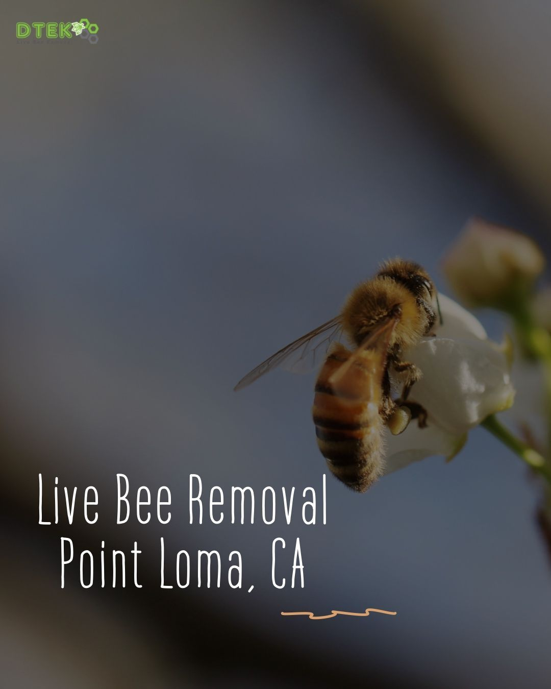 If You Are In Need Of Bee Removal In Point Loma Look No Further Than D Tek Live Bee Removal We Are Experts In The Safe Live Remov In 2020 Bee Removal