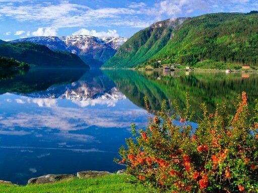 Flower, Mountain, Water, Sky - Fresh, solid, reflecting, free