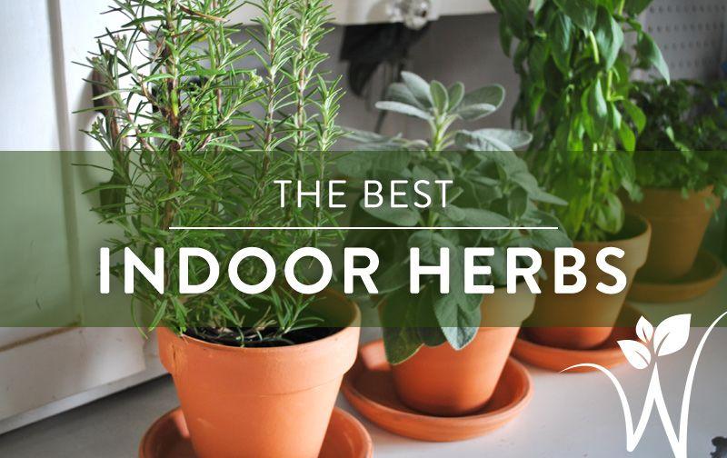 The Best Indoor Herbs Best Herbs To Grow Herbs 640 x 480