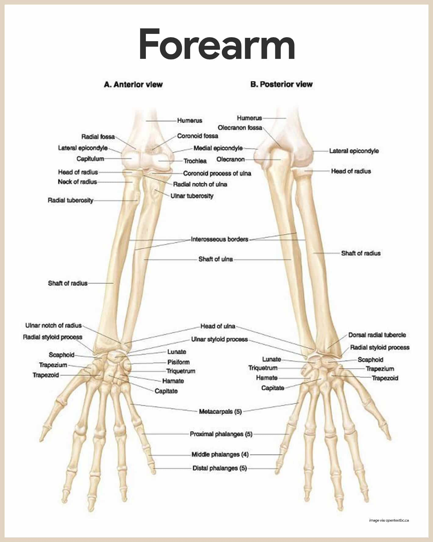 Skeletal System Anatomy and Physiology | Medicina y Anatomía