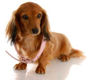 Popular Girl Dog Names Girl Dog Names Cute Names For Dogs Girl