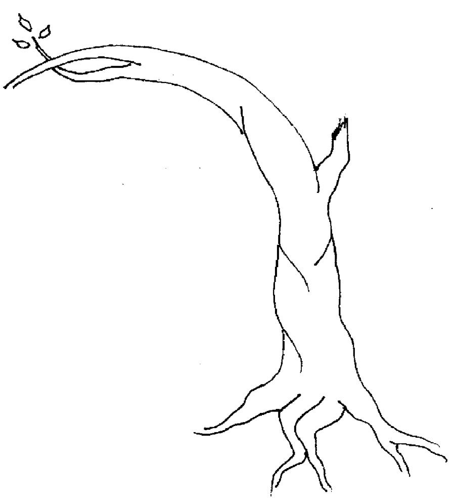 apple tree without leaves coloring page tree pinterest apple