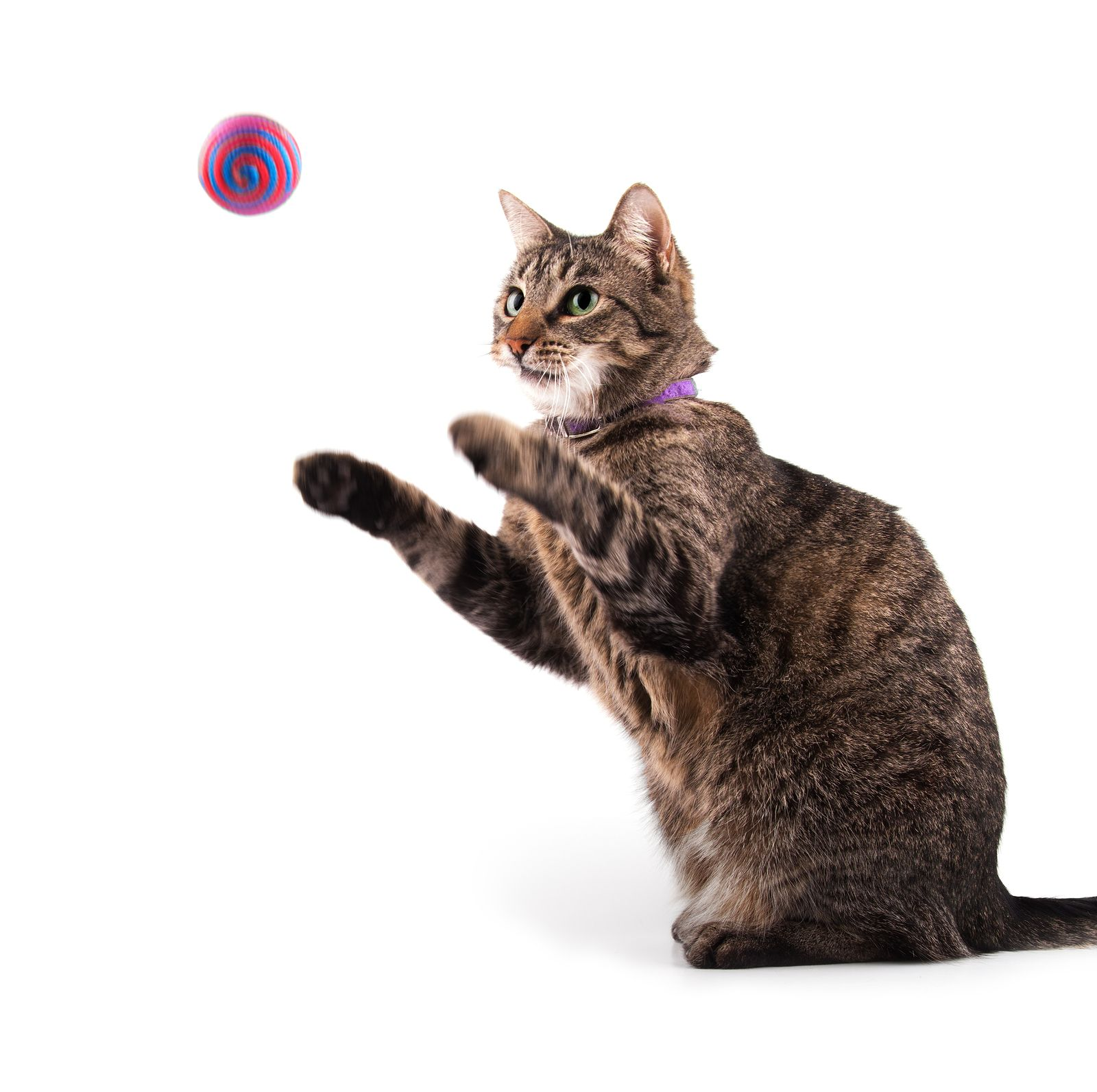 5 Fun Ways To Exercise Your Cat Cats And Kittens Cute Cats Cats