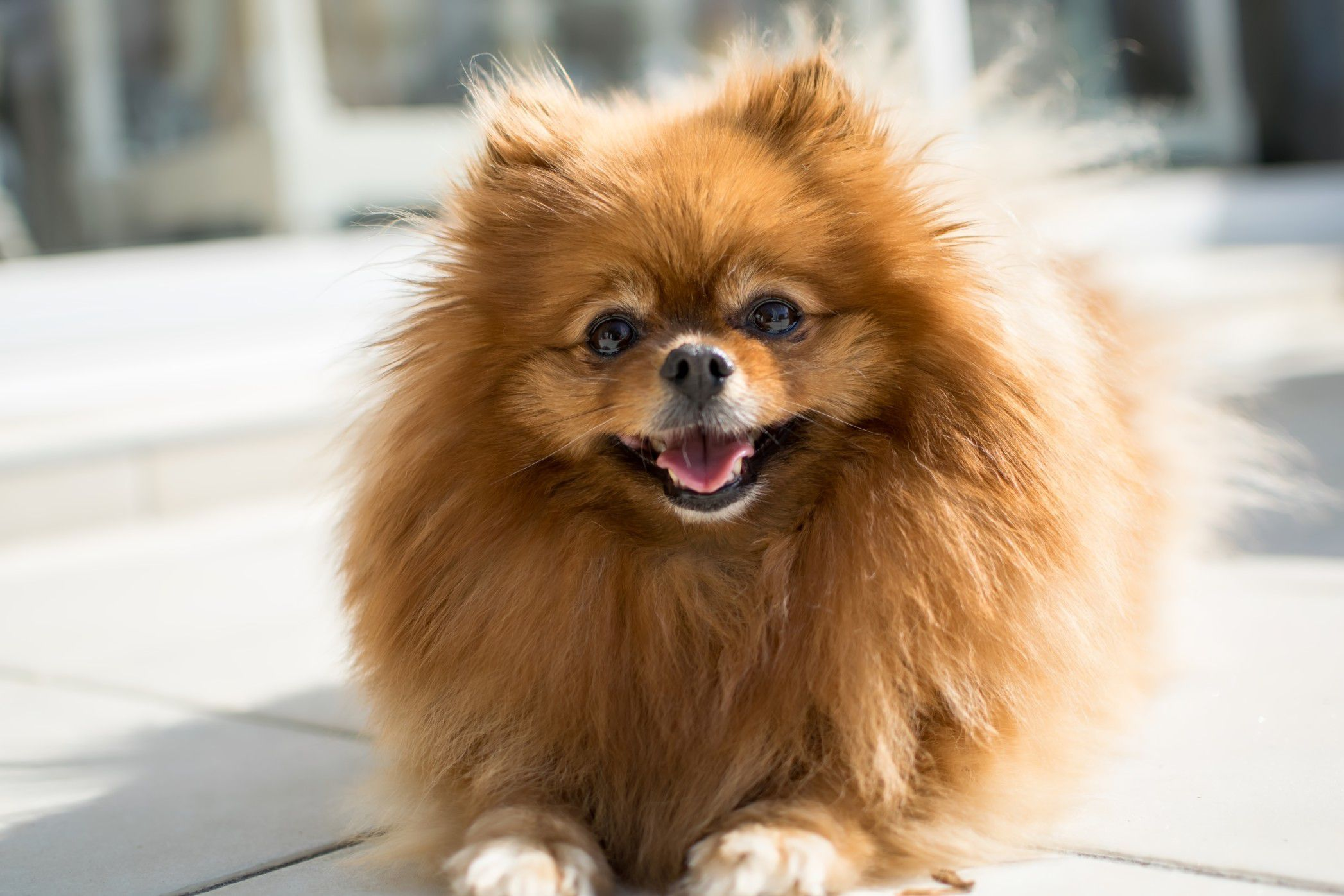 The Best Small Dog Breeds Best Small Dogs Dog Breeds That Dont