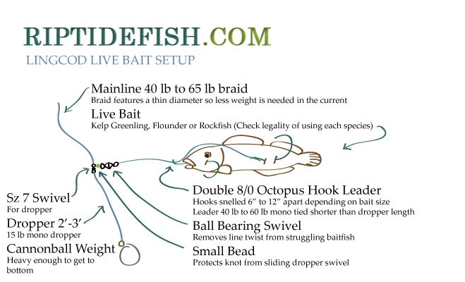 lingcod-live-bait-setup | Fishing Websites | Ling cod