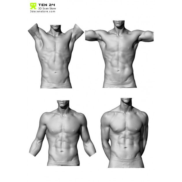 Male Torso Scan Bundle Man Anatomy Body Anatomy Male Torso
