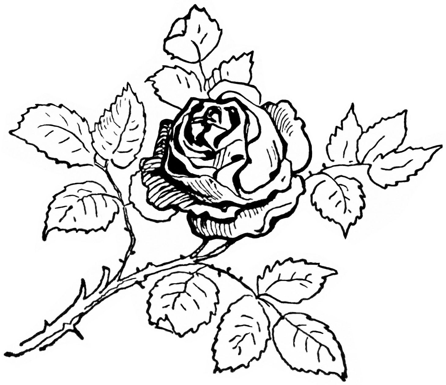 Coloring Rose Pages Rose Coloring Pages Flower Coloring Pages Coloring Pages