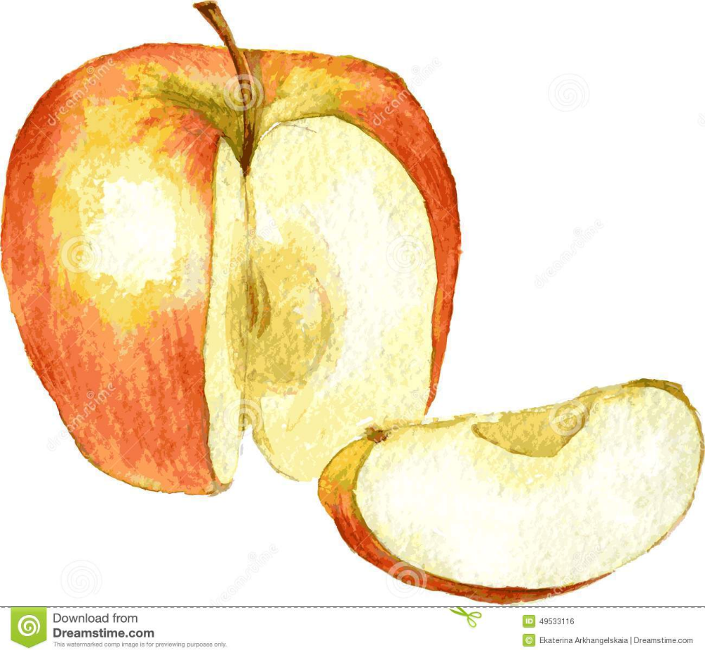 Watercolor Apple Google Search Watercolor Drawings Hand Drawn Vector Illustrations