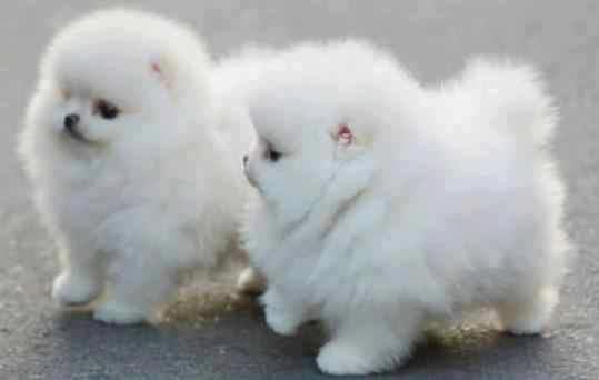 Fluffballs!!  :-)