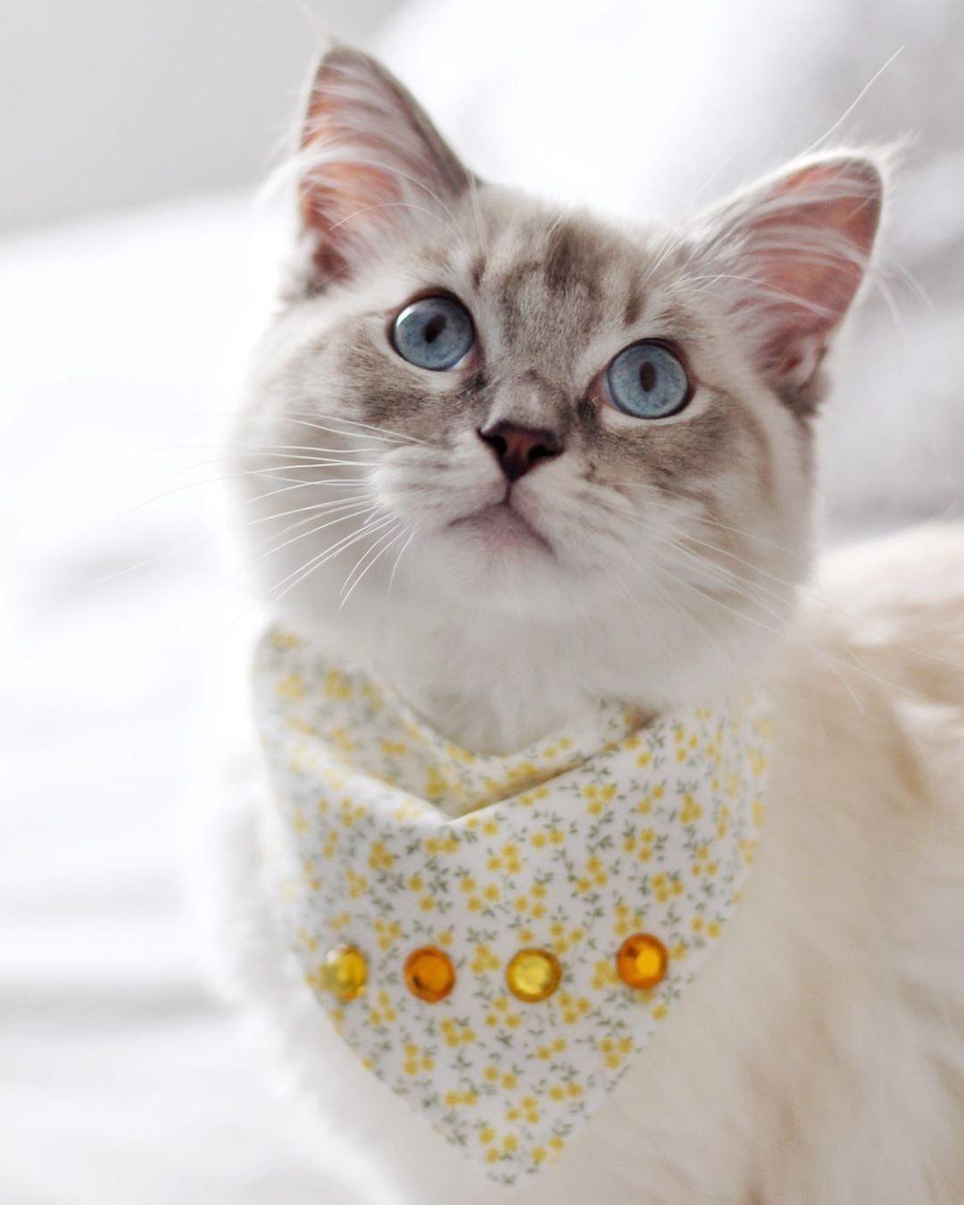 Pin By Satua Vaan On Kissat With Images Sopot Kissat Sopoja Elaimia Cute Kittens