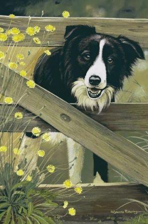 My Future Home Will Include A Border Collie Border Collie Puppies Border Collie Collie Puppies For Sale
