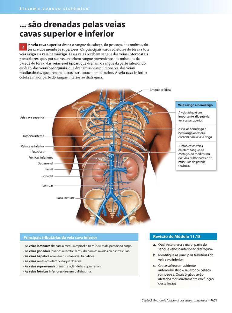 Excelente Anatomía De La Salida Torácica Colección de Imágenes ...