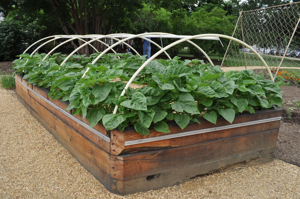 17 Best 1000 images about Vegetable Gardening on Pinterest Raised