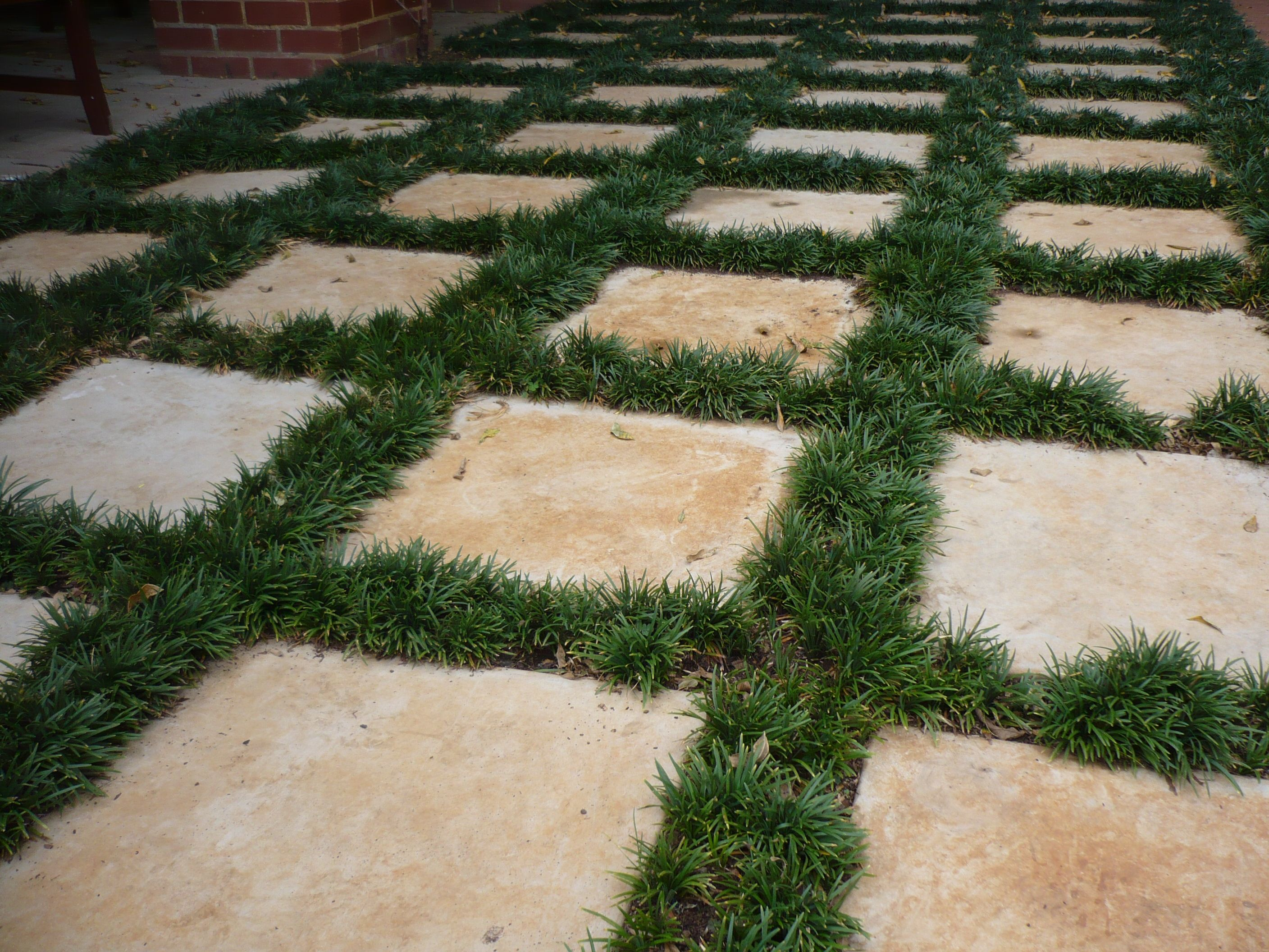 Steppingstones with mondo grass hard surfaces for Hard surface garden designs
