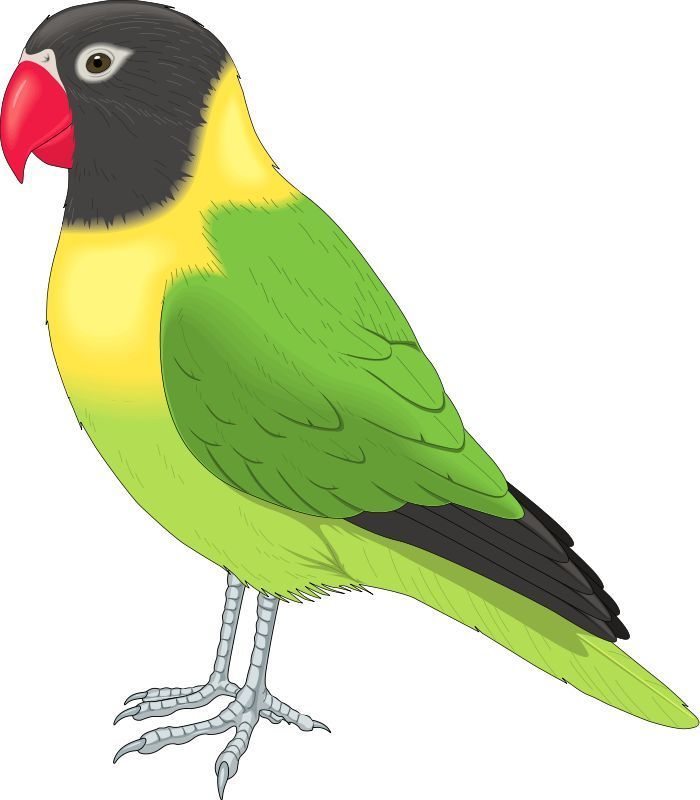 Bird Clipart Full View And Download Love Birds Wallpaper 3 With Bird Graphic Art Images Bird Clipart