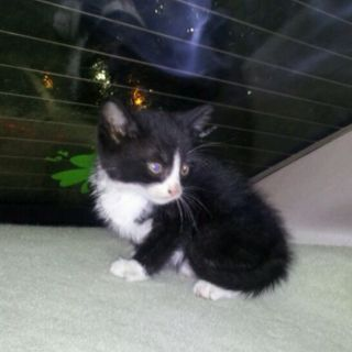 Cute little kitty we rescued from under a car hood !